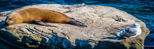 2014 - San Diego - La Jolla Cove - Shared Rock - 2 of 2 | by Ted's photos - For Me & You