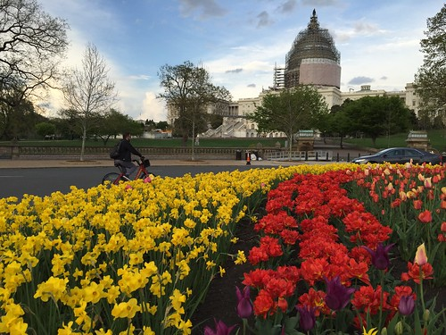 Bikeshare, tulips an the Capitol | by Joe in DC