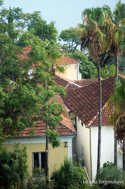 Дома среди пальм
