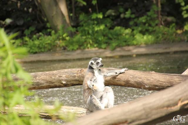 Tierpark Friedrichsfelde 29.05.201645