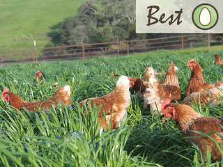 pasture-fresh-eggs-best | by Farm Fresh To You -
