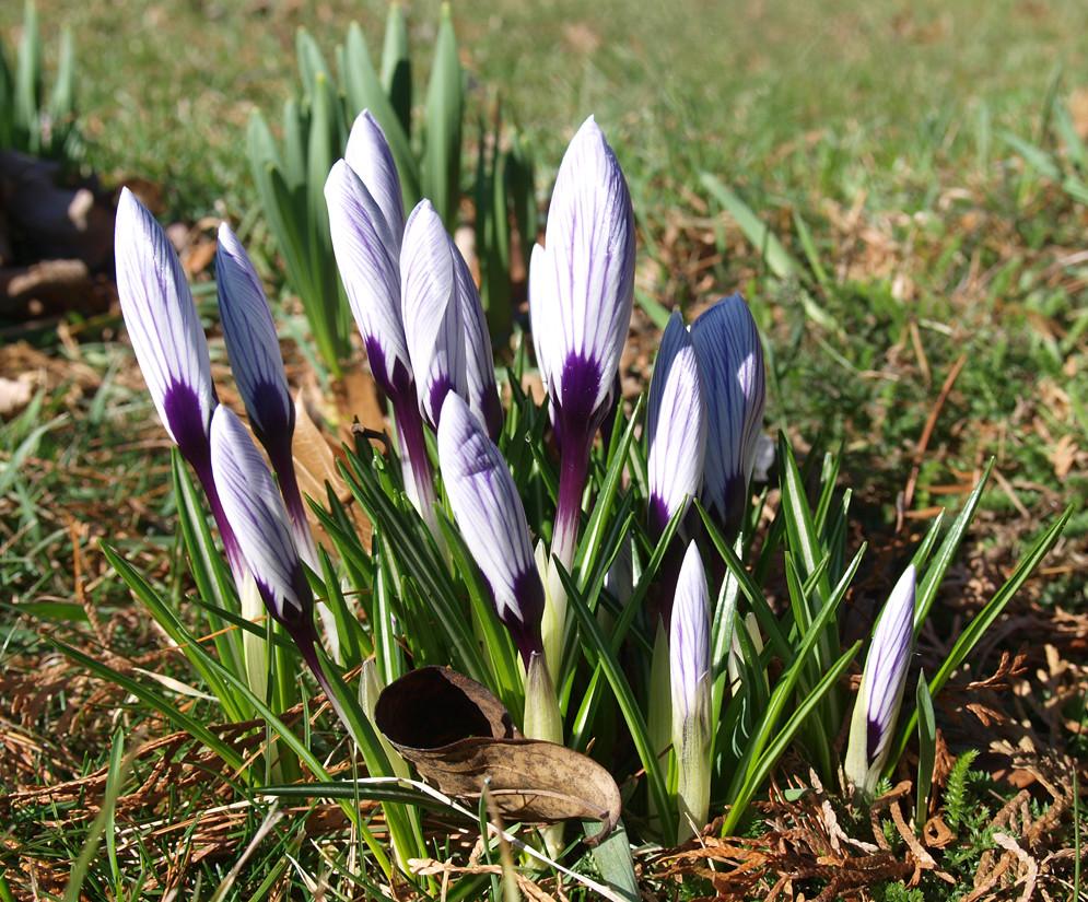 First Flowers Of Spring Jadelapeeratt Flickr