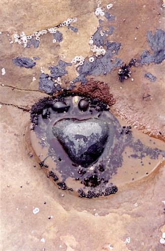 Heart-shaped stone in a tide pool at French Creek Beach near Sooke