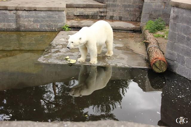 Besuch Zoo Rostock 09.07.201680