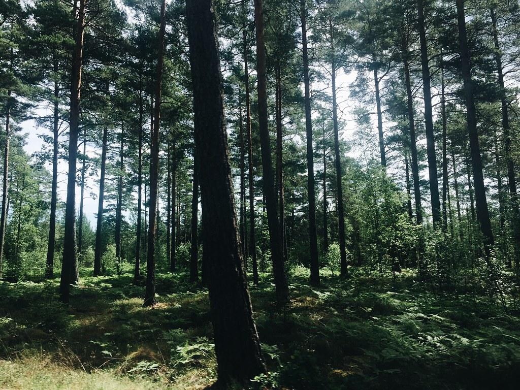 skeppsgården archipelago sweden forest trees