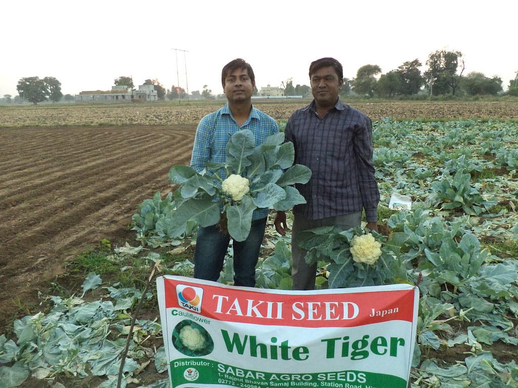 takii seeds india   sabaragroseeds   Flickr