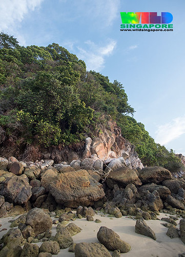 Natural coastal forest and rocky shores of St. John's Island
