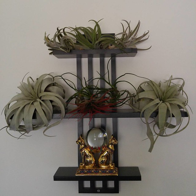 Bedroom decor/large air plant inventory management update #airplant #airplants