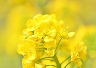 vitamin color Vitamin A