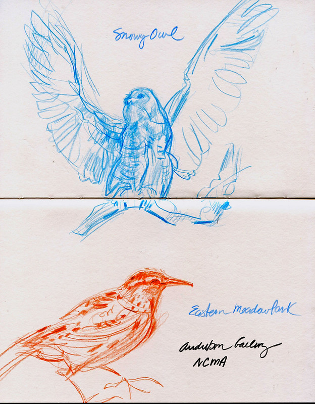 NCMA: Audubon gallery sketches