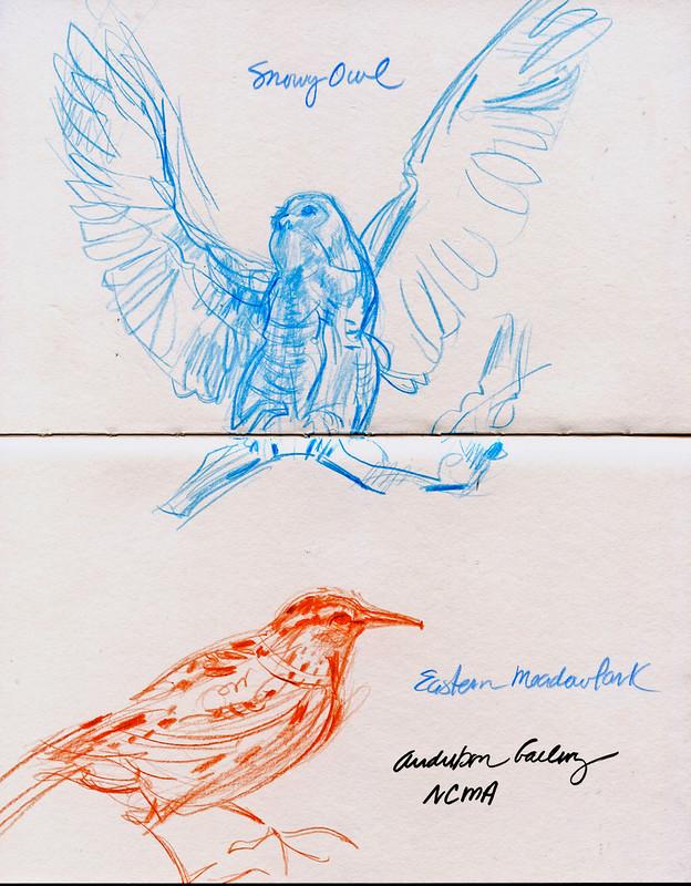 NCMA: Audubon gallery sketches