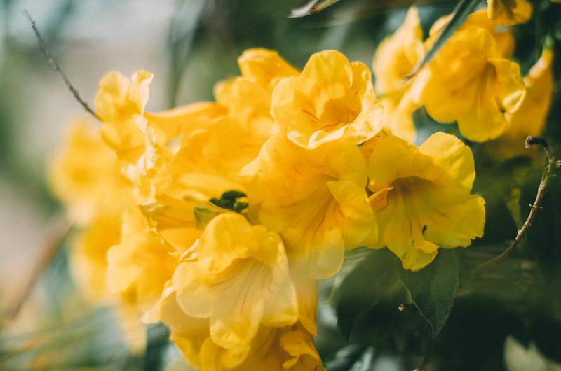 flowerpower-2