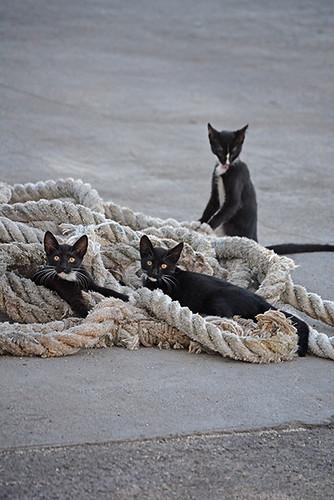 pier kittens