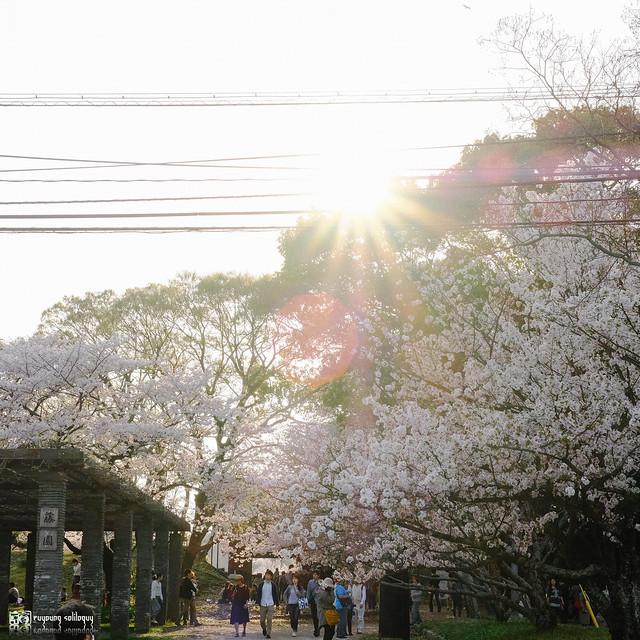 北九州之春 | 01
