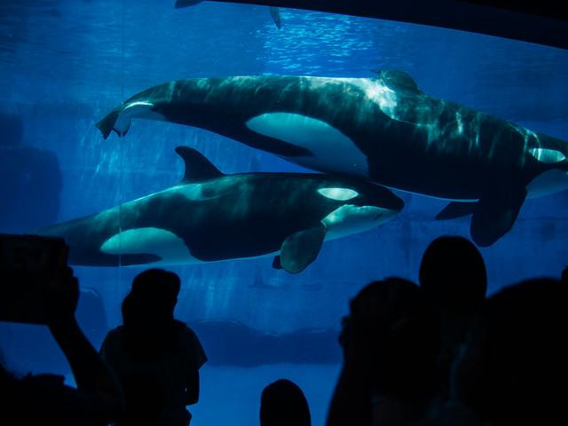 160730_Aquarium-3