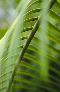 Palm Leaves | by FurLined