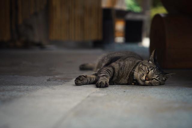 夏バテ猫さん