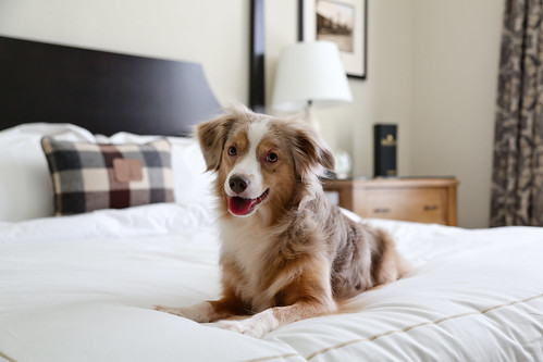 Dog Friendly Hotel Near Kerrville Tx