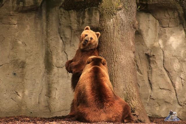 Tierpark Hagenbeck 21.05.2016  044