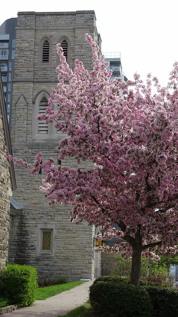 Blossoms near the Church