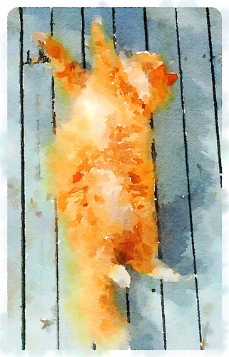 Fluffy ginger cat in Waterlogue