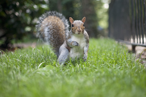 Brave squirrel on the grass | by Vladimir Yaitskiy