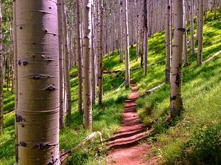 Lockett Meadow / Inner Basin Trail @ Flagstaff, AZ | by mobile.rik