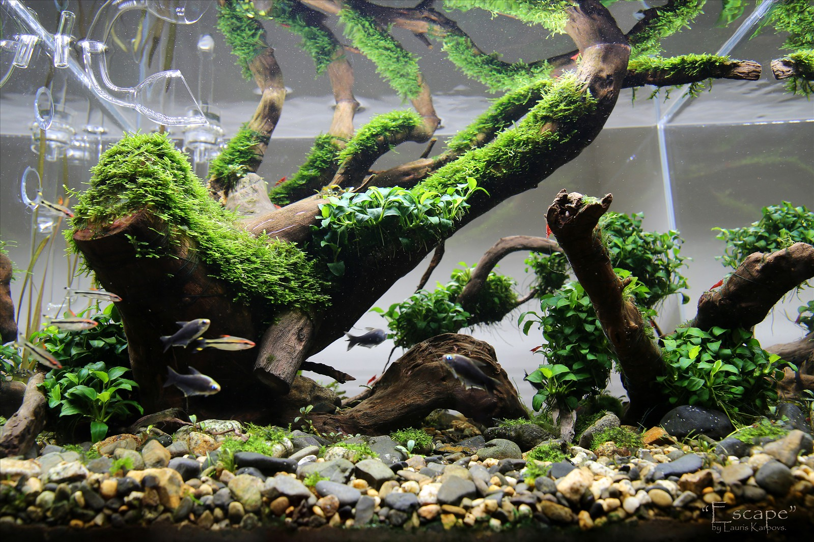 aquascaping | Landscape close up
