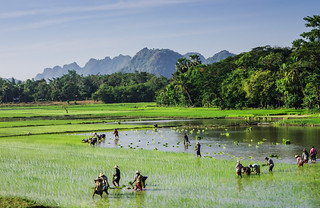 Planting rice | by pietkagab