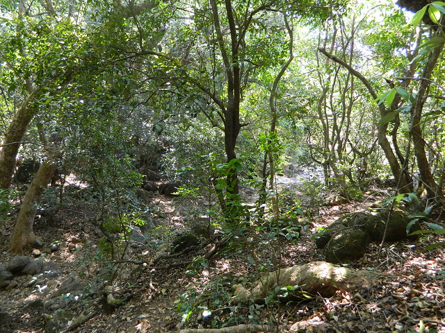 Jungle while descending khanu