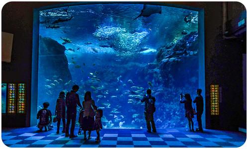 Enoshima Aquarium - Main Tank