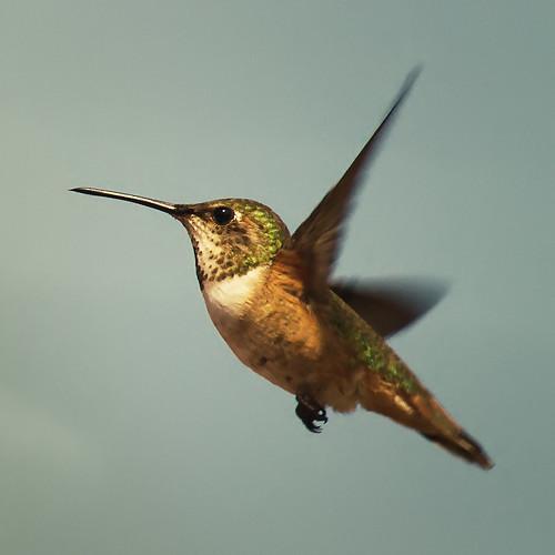 Hummingbird Feeder Home Depot Canada