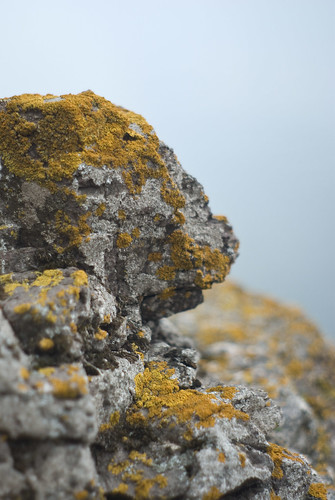 Rock and Moss | by dan_spun