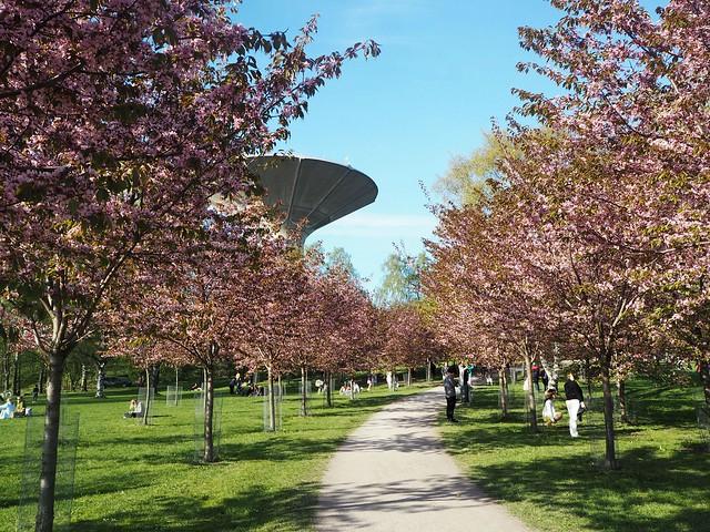 candycherrytreesP5125118,candygirlcherrytreepark2P5125066, cherry park, helsinki, suomi, finland, roihuvuori, kirsikkapuisto, cherry tree park, kirsikkapuu puisto, blossom, kukinta, sakura, itä-helsinki, east helsinki, lovely, ihana, green, pink, vihreä, pinkki, sun, aurinko, flowers, kukat, blossom, kukinta, may, toukokuu, kevät, spring, vaaleanpunainen, takki, coat, light pink, pale pink, cherry blossom girl, kirsikankukka tyttö, nature, luonto,