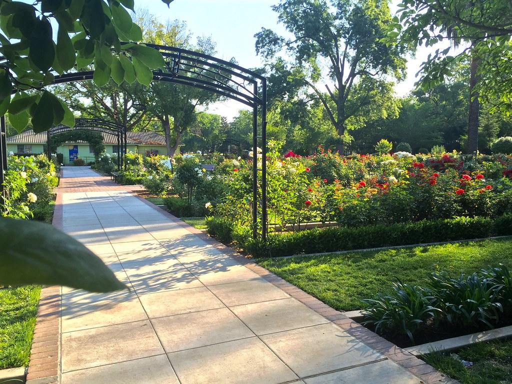 ... McKinley Park Rose Garden, Sacramento CA | By Greg Balzer