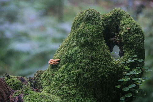 Parque Natural de #Gorbeia #DePaseoConLarri #Flickr - -880