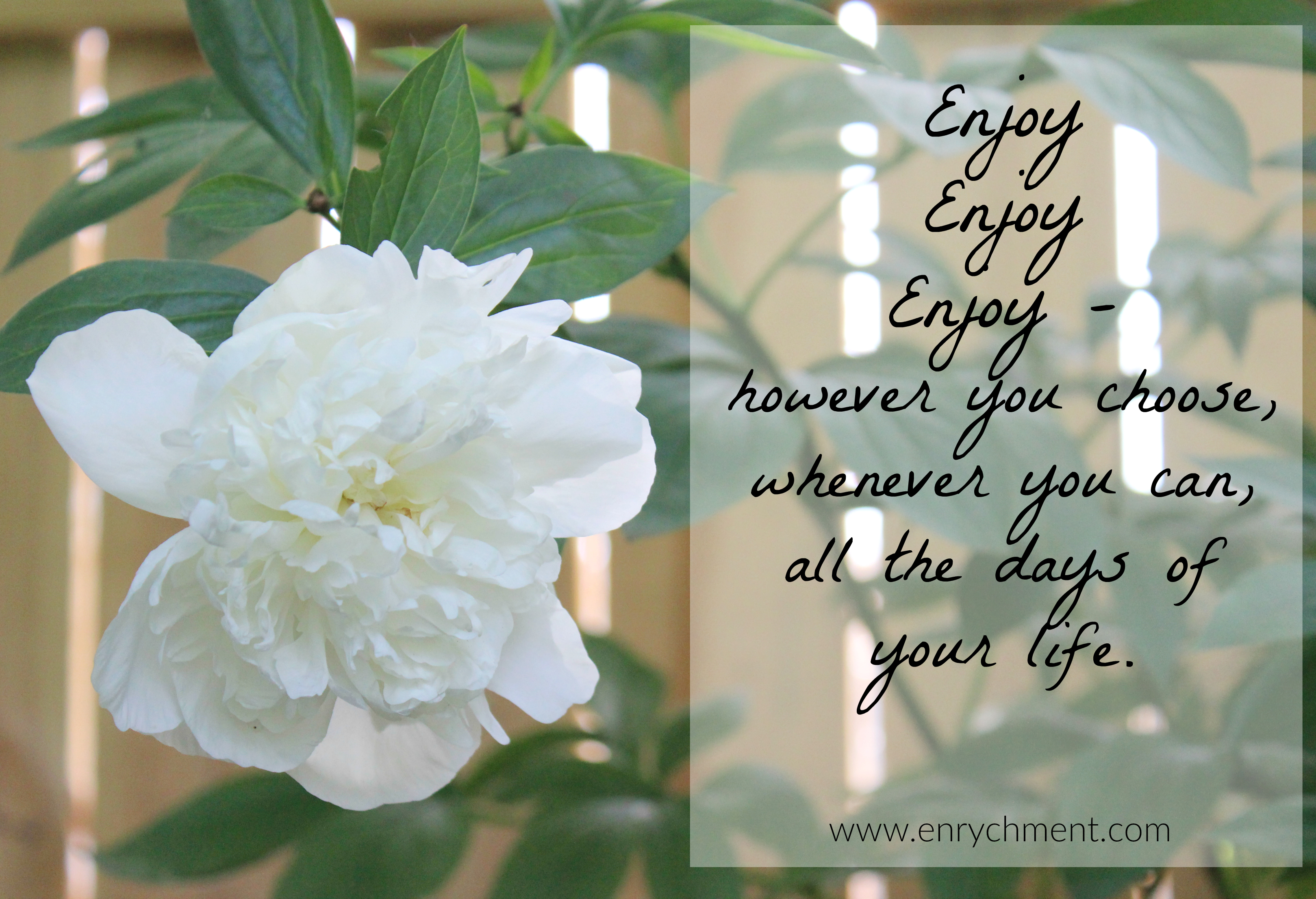 Enjoy enjoy enjoy, however you choose, whenever you can, all the days of your life.