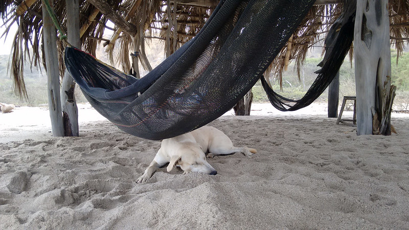Hammock Time in Zorritos, Tumbes, Peru