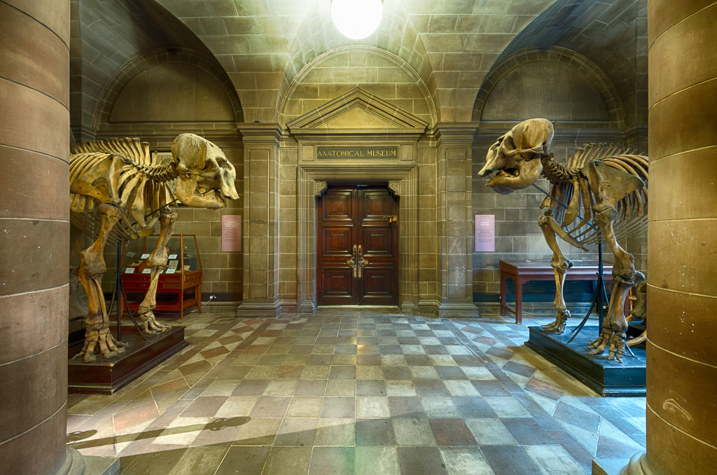 An Evening At The Museum Two Asian Elephant Skeletons In T Flickr