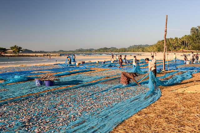 Fish drying, Ngapali beach, Gyeiktaw, Myanmar. Photo by Finn Thilsted.