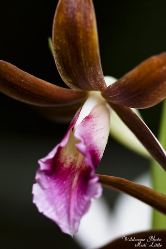 groundorchid5 | by Oceanic Wilderness