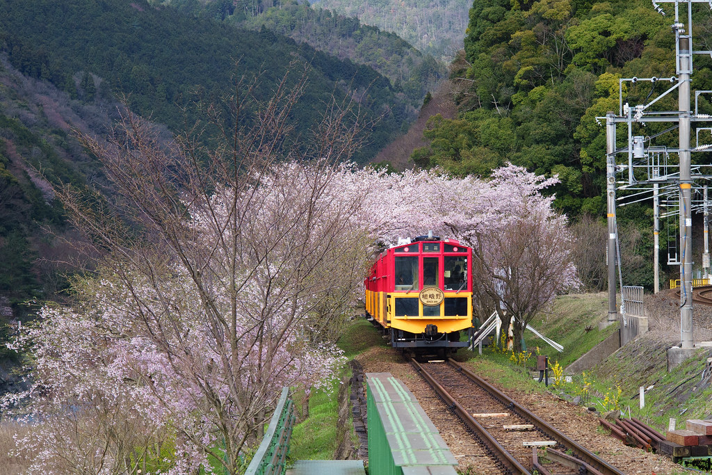 Sagano-Romantic-Train-Sakura-1