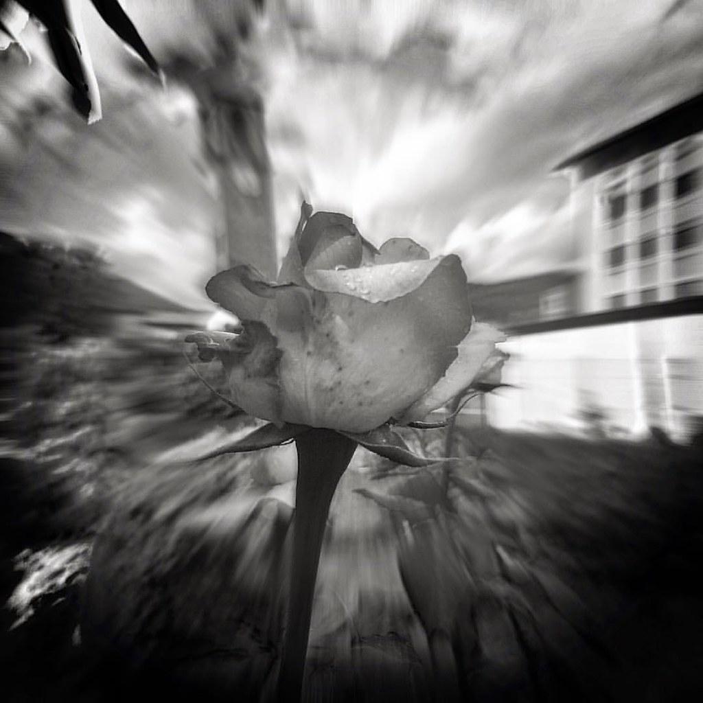 Una Rosa Flowers Flower Rosa Petal Petals Nature Be Flickr