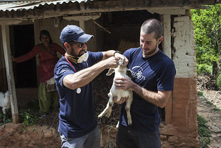 World Vets International Aid  for Animals | by WorldVets