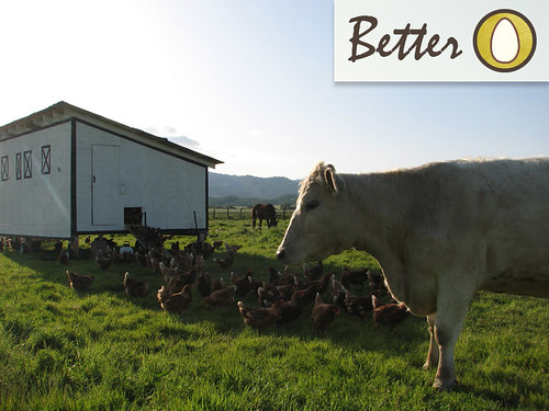 ches-free-flying-eggs-better | by Farm Fresh To You -