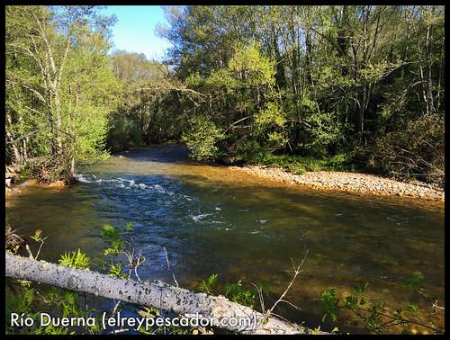 Río Duerna - Coto de Priaranza (León)