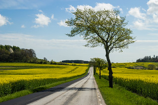 Country road and yellow field | by Infomastern