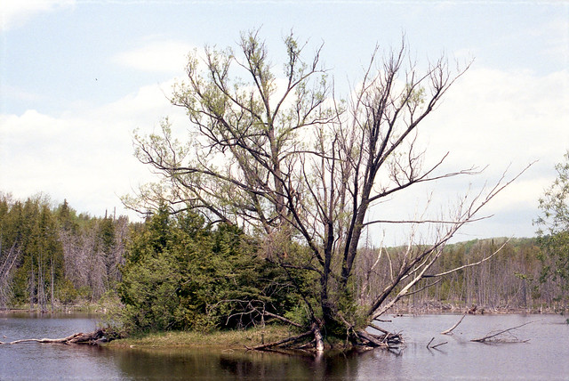 Tiny Island on a No Name Lake_