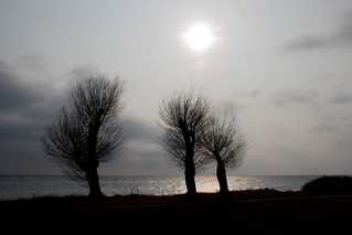 Trees by the Coast | by Infomastern