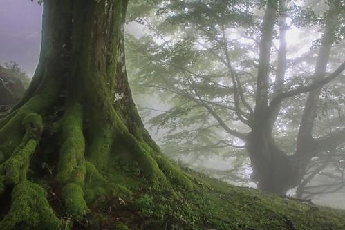 Parque Natural de #Gorbeia #Orozko #DePaseoConLarri #Flickr - -640